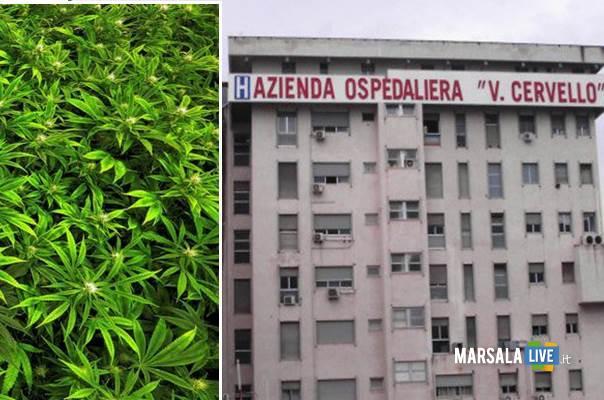 Presentazione marsalalive 10 15cannabis 16 mesi