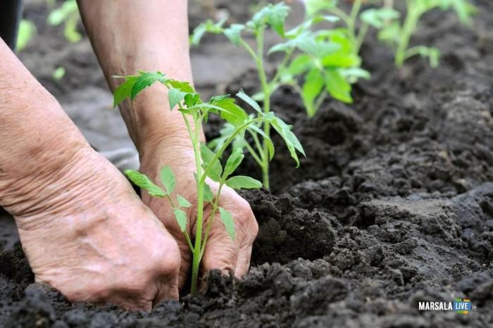 cia futuro agricoltura enzo maggio