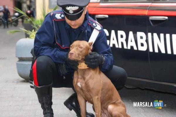 pitbull-maltrattati-Valderice marsalalive