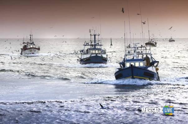 OP-Organizzazioni-dei-Produttori-della-Pesca-Sicilia-Cartabellotta