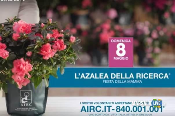 airc-2016-azalea-ricerca-marsala