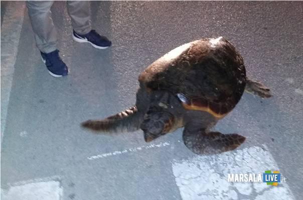 Marsala-Caretta-Caretta-tartaruga-Lido-Pakeka-Ancr