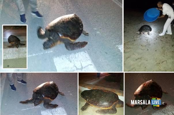 Marsala-tartaruga-Caretta-Caretta-Lido-Pakeka-Ancr