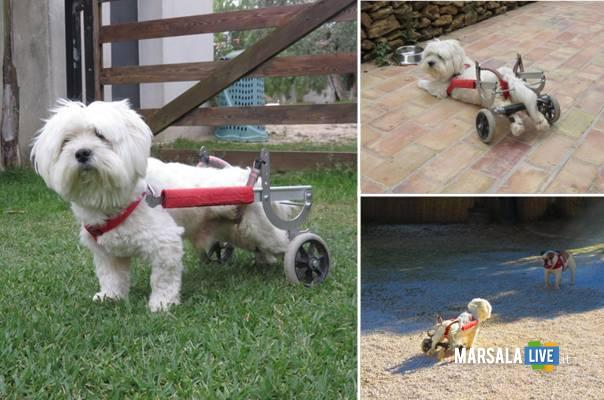 Murphy-il-cane-che-cammina-con-le-ruote-castelvetrano-selinunte