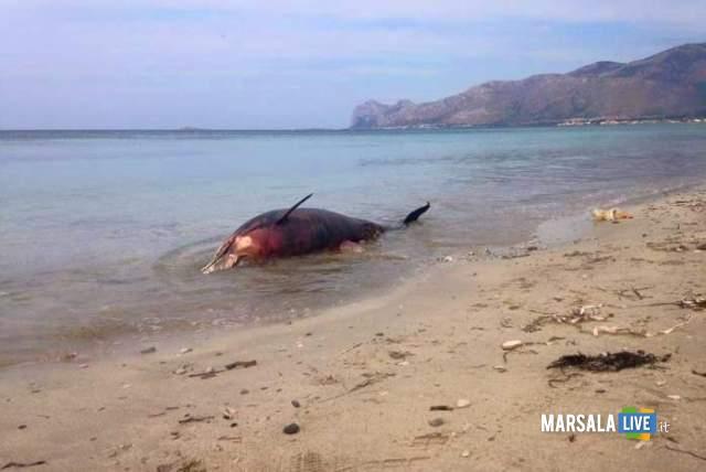 delfino-arenato-sulla-spiaggia-a-Villagrazia-di-Carini