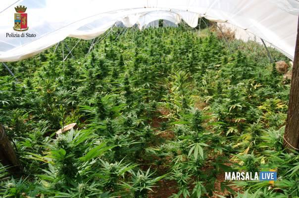 marsala-droga-polizia-sequestra-45-tonnellate-di-marijuana