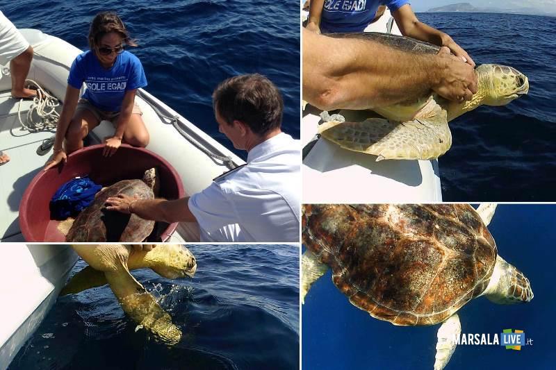 area-marina-protetta-enea-tartaruga-marina-favignana