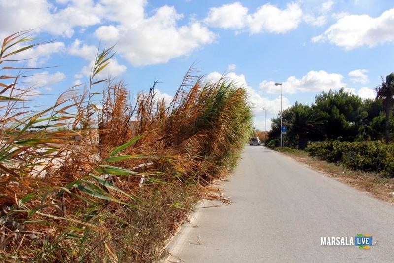 litorale Stagnone marsala canneto