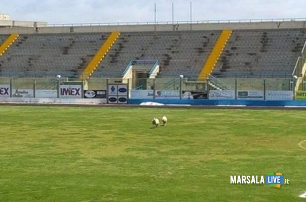 pecora-lombardo-angotta-stadio-marsala