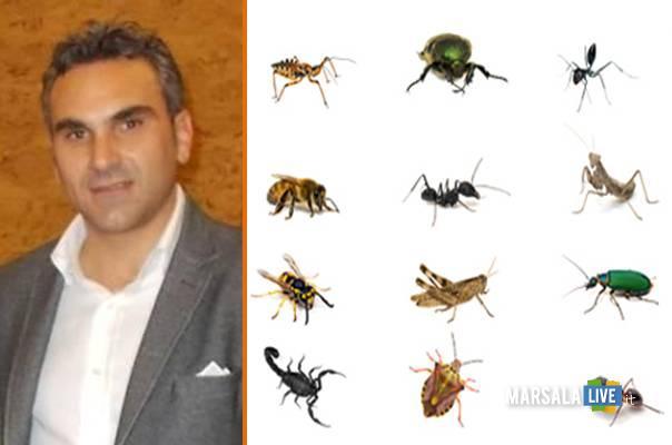 sturiano-marsala-insetti-topi-zanzare