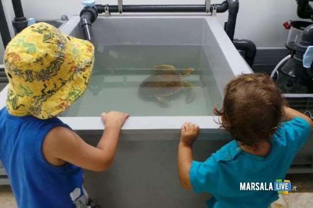 centro-di-primo-soccorso-per-tartarughe-marine