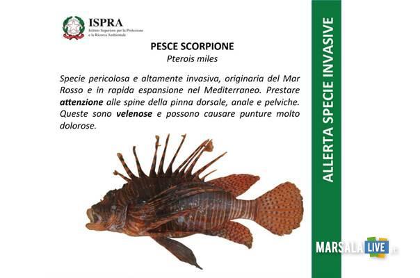 pesce-scorpione-pterois-miles