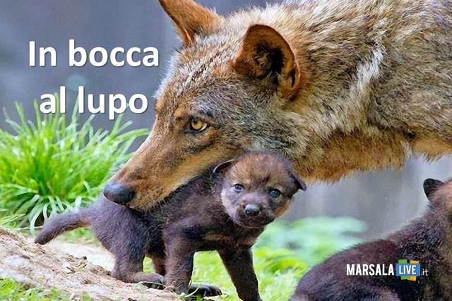 in-bocca-al-lupo-viva-il-lupo-no-crepi