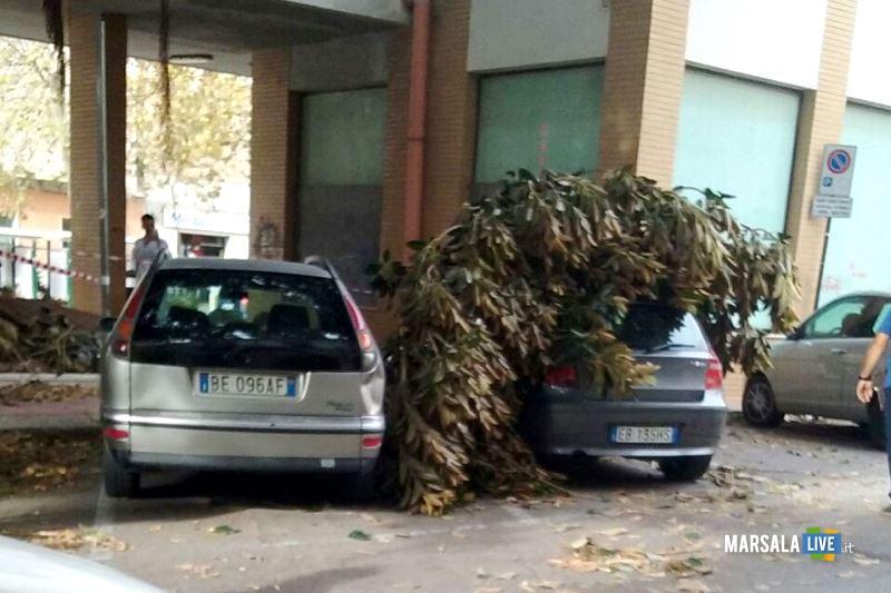 marsala-albero-ramo-piazza-del-popolo