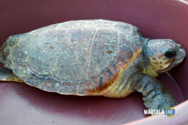 beatrice-tartaruga