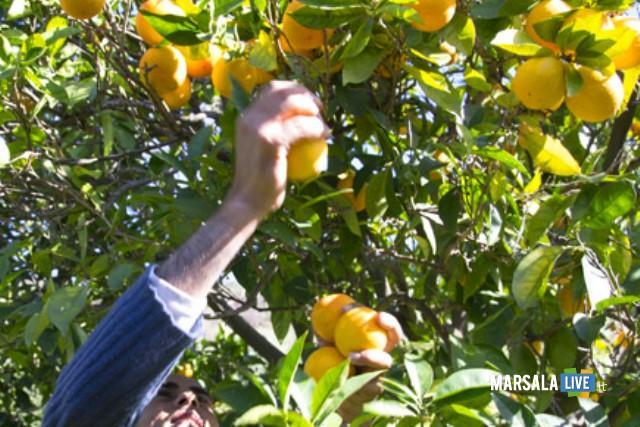 limoni-rubano-marsala