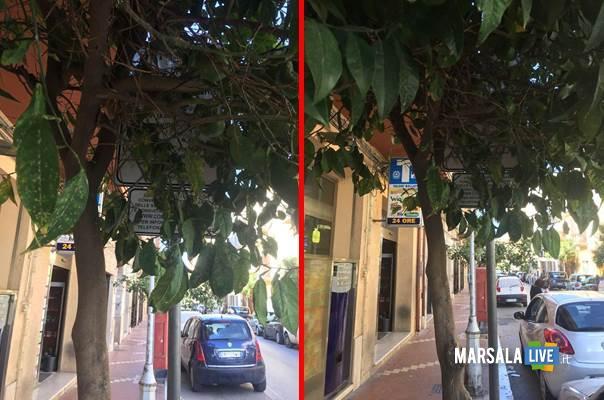 ramo-dell-albero-di-via-roma-a-marsala