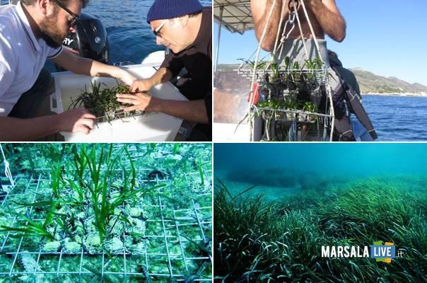 nuovo-trapianto-sperimentale-di-posidonia-oceanica-cnr-iamc