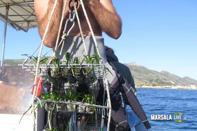 posidonia-favignana-area-marina-protetta