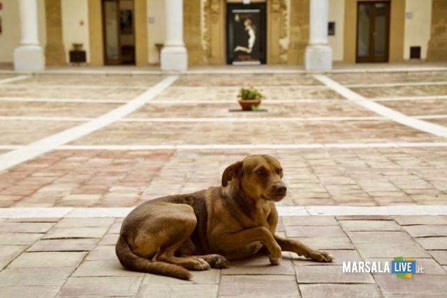 nicola-cane-mascotte-mazara-del-vallo