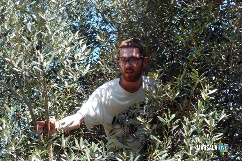 Agricoltura-Campionato-regionale-potatura-dell-olivo-Castelvetrano