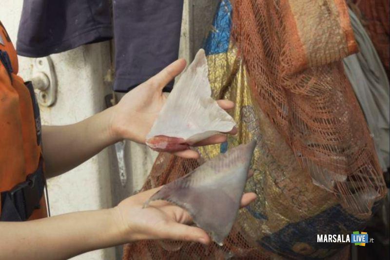 Greanpeace,pinne di squalo su peschereccio siciliano,fermato