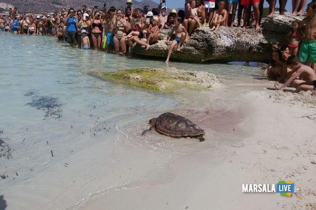 tartaruga diventa simbolo dell'installazione Plastic alle Egadi (2)