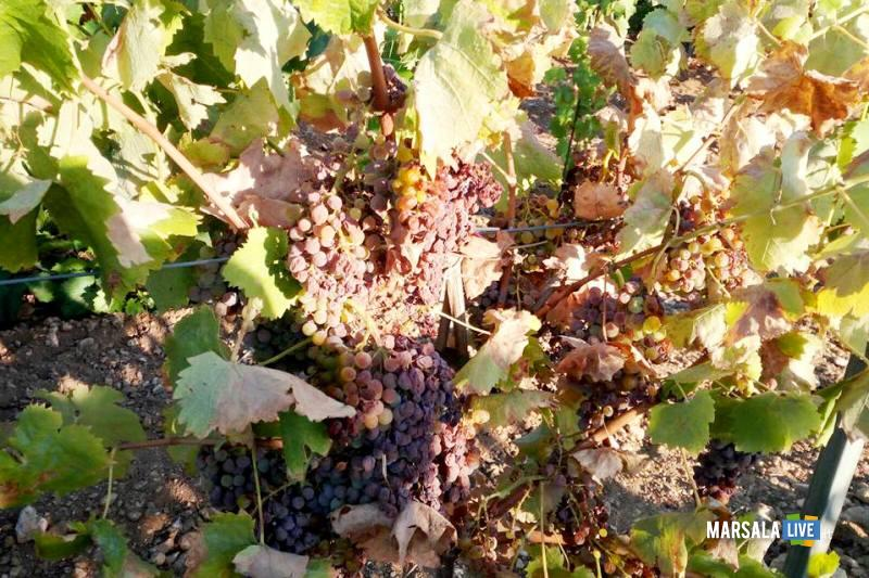 A rischio produzione vitivinicola