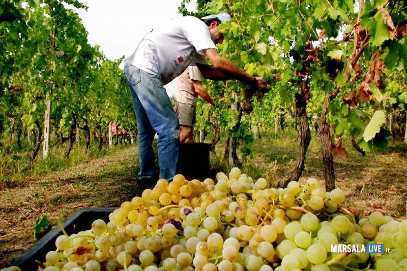 vendemmia-uva-sicilia