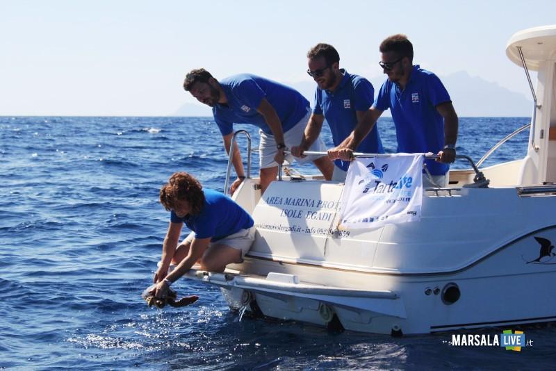 Hydra-in-mare-dopo-le-cure-al-Centro-Primo-Soccorso-AMP-Isole-Egadi 1