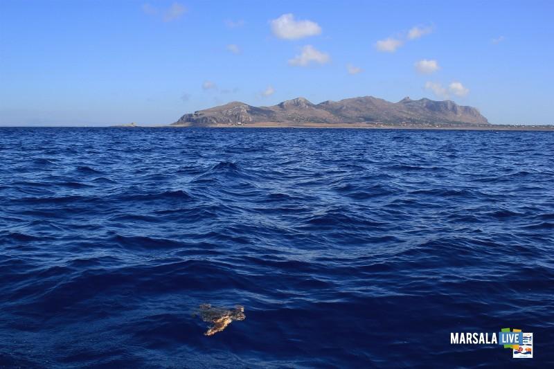 Hydra-in-mare-dopo-le-cure-al-Centro-Primo-Soccorso-AMP-Isole-Egadi 2