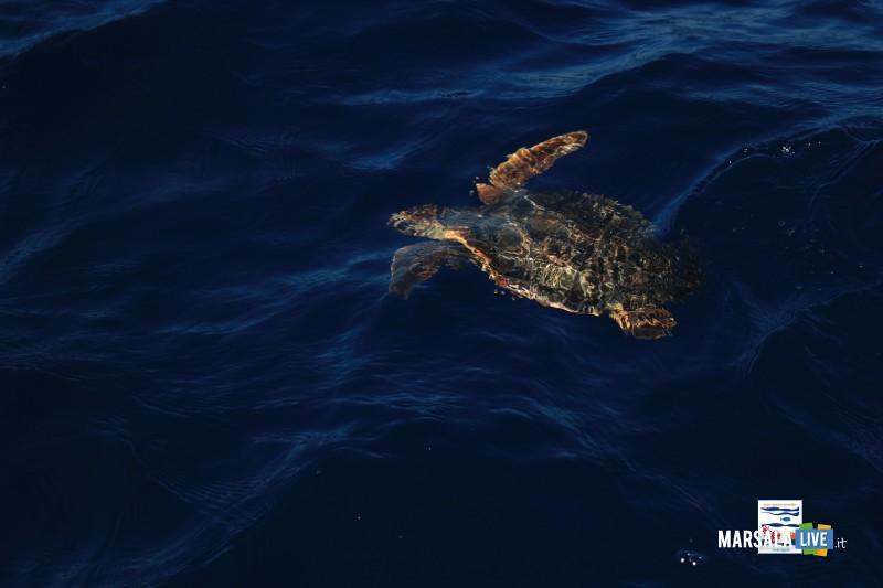 Hydra-in-mare-dopo-le-cure-al-Centro-Primo-Soccorso-AMP-Isole-Egadi 3