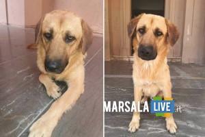 zorro-cane-piazza-loggia-marsala