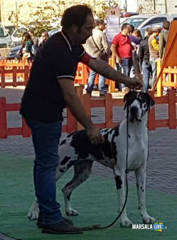 Andrea Sofia melanie World Dog Show alano Marsala-