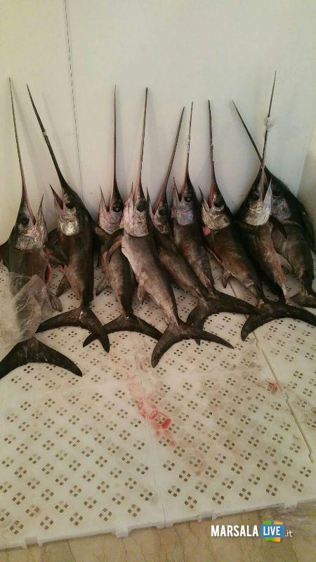 Marsala sequestrati 9 esemplari di pesce spada (1)
