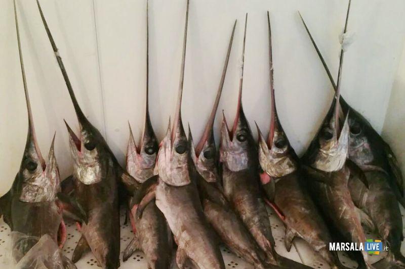 Marsala sequestrati 9 esemplari di pesce spada (2)