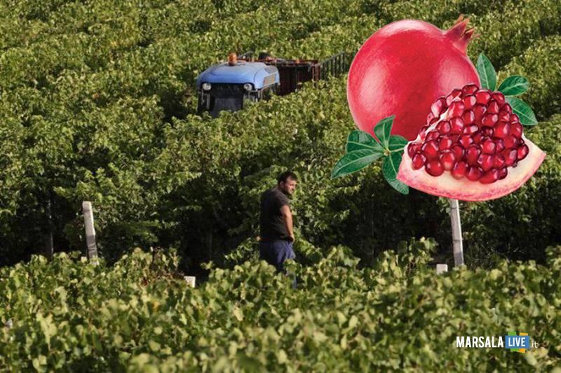 Wonderful Strasatti Marsala vino melograno Agrario