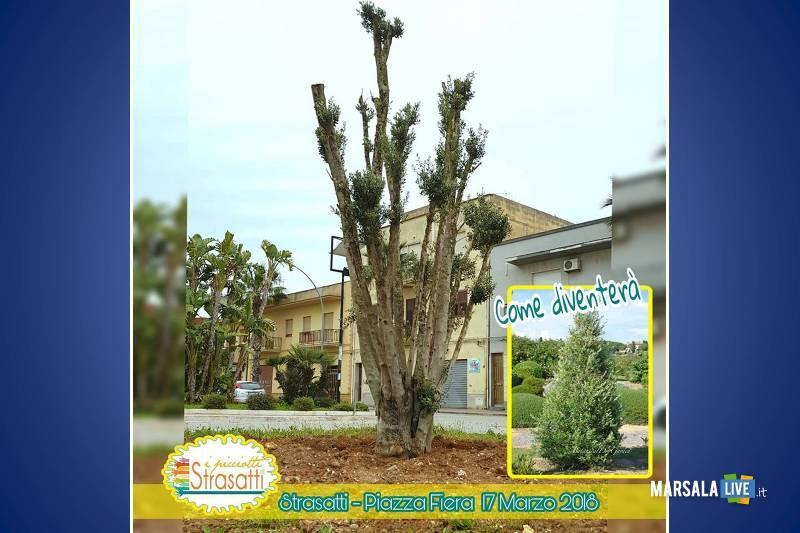 albero-piazza-fiera-i-picciotti-di-strasatti-marsala