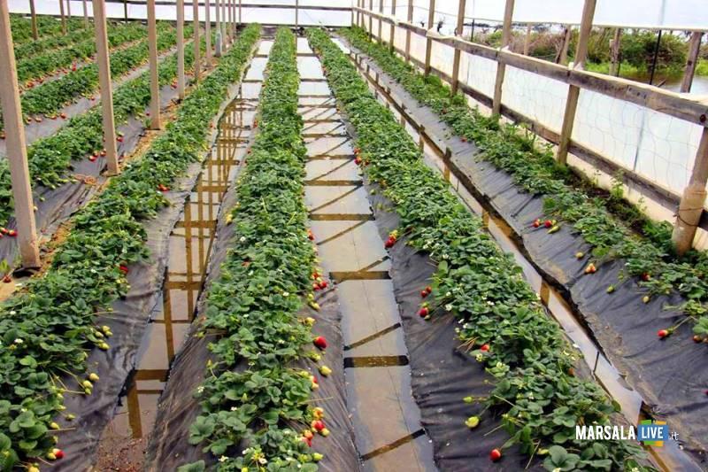 crisi di mercato agricoltura marsala