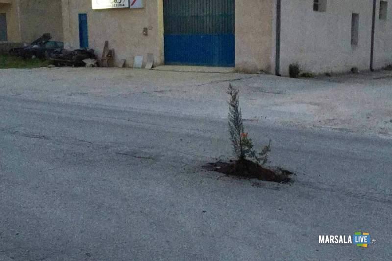 fiori piante nelle buche strade marsala strasatti fornara - (1)
