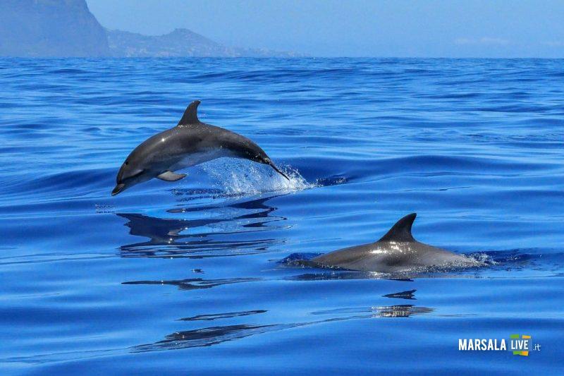 Pescatori e delfini