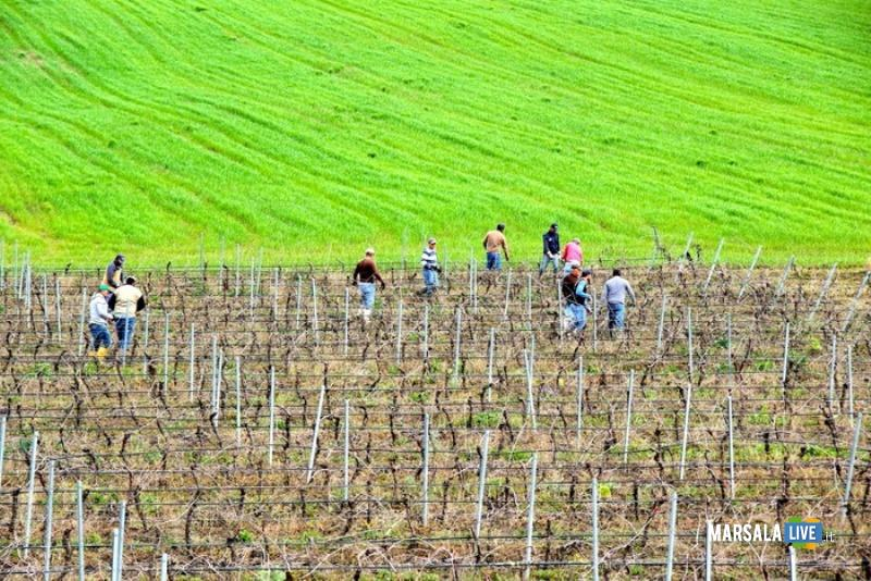 vino-agricoltura-vigneto
