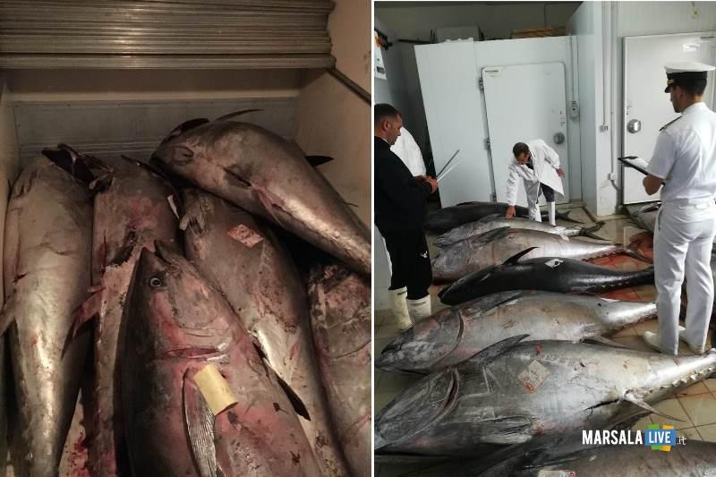22 quintali di tonno rosso sequestrati dalla Guardia Costiera di Marsala