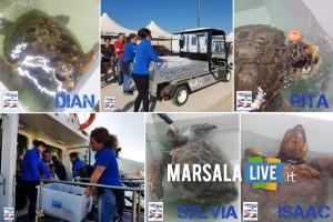 Primo Soccorso AMP Isole Egadi quattro tartarughe marine