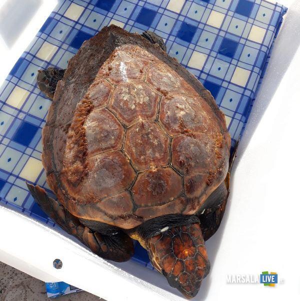 caaretta caretta capo boeo marsala guardia costiera tartaruga (2)