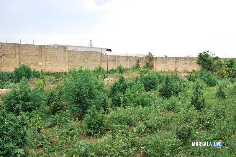GIACALONE-Michele-piantagione