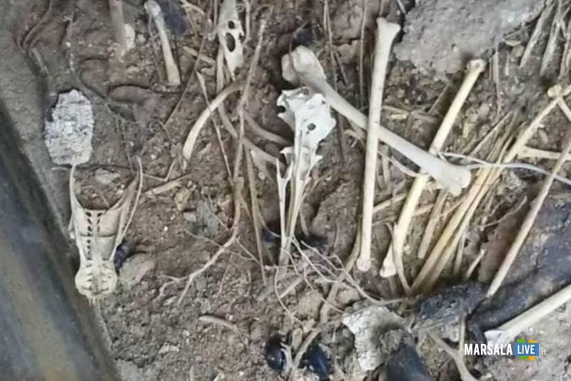 fossa comune cani marsala