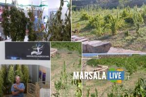 Marijuana, vite ad alberello, cappero - Pantelleria e la nuova agricoltura