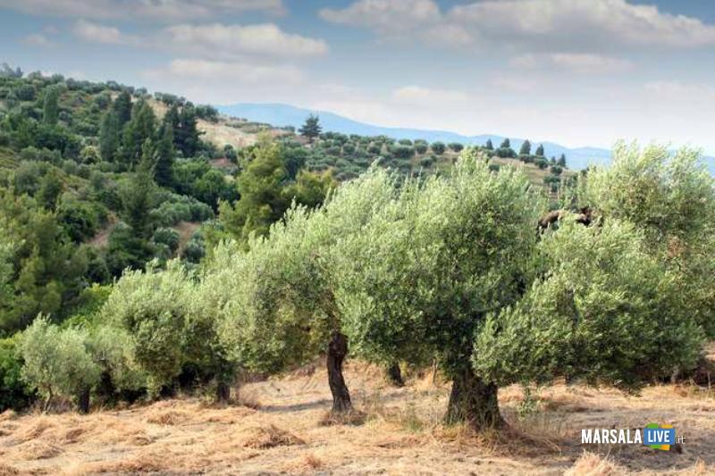 uliveto - Cia Sicilia Occidentale