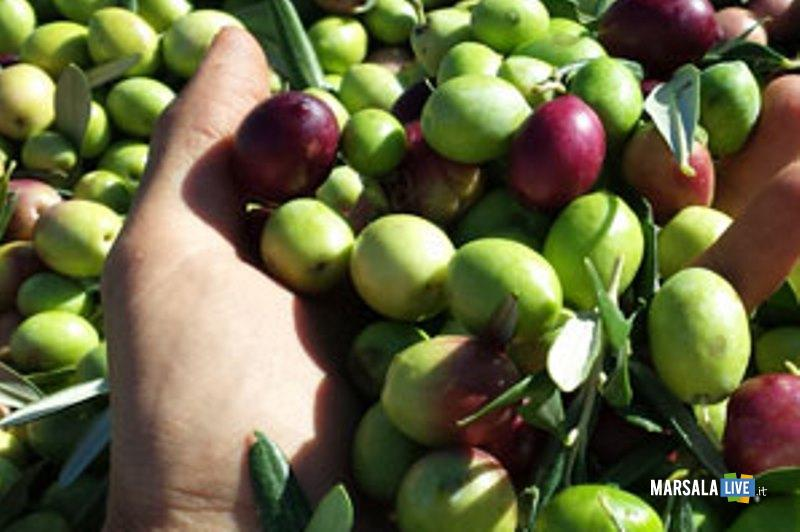 Nocellara olive belice